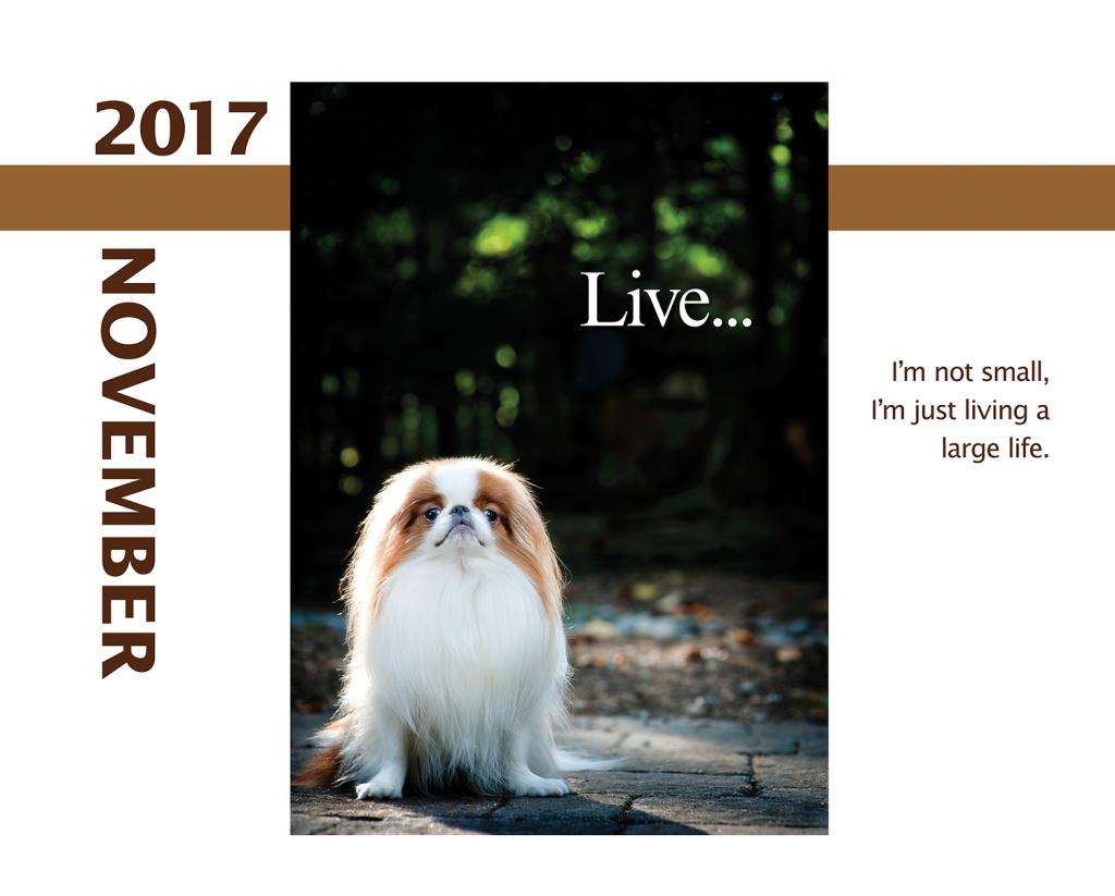 2017-Calendar-Feb-thru-Dec-MandO-no-bleed10